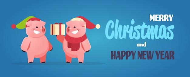 Paar süße schweine für chinesisches neujahr mit geschenkbox für weihnachten vorhanden