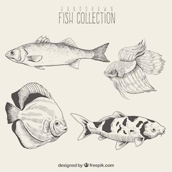Pack von fisch skizzen