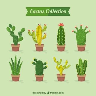 Packung des schönen kaktus
