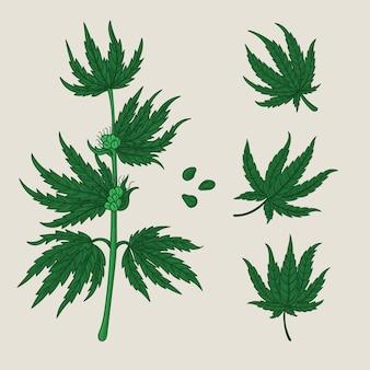 Packung mit botanischen cannabisblättern