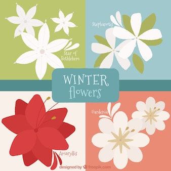 Packung mit dekorativen winter blumen in flaches design