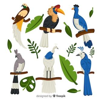 Packung mit flachen exotischen vögeln
