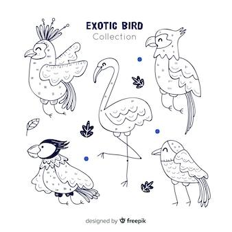Packung mit handgezeichneten exotischen vögeln