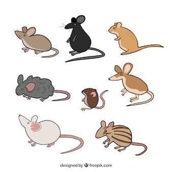 Packung mit niedlichen mäusen züchtet