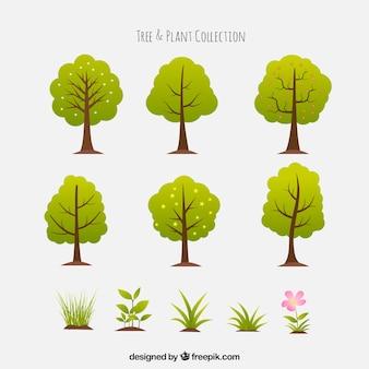 Packung mit sechs bäumen und schönen pflanzen