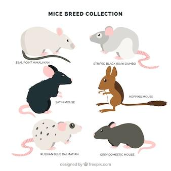 Packung mit sechs mäusen rassen