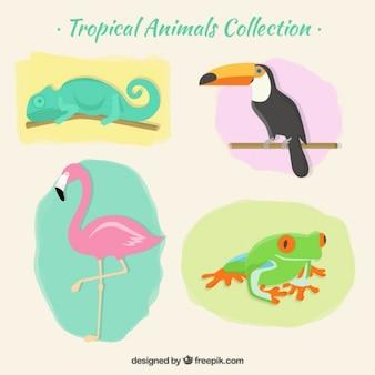 Packung mit tropischen tieren