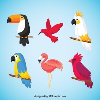 Packung mit tropischen vögeln