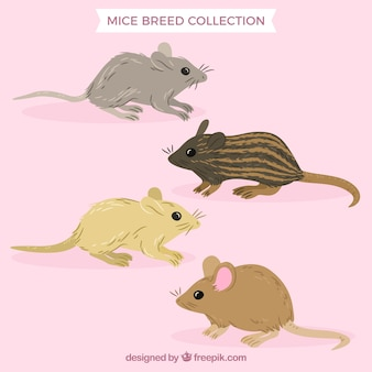 Packung mit vier mäusen rassen