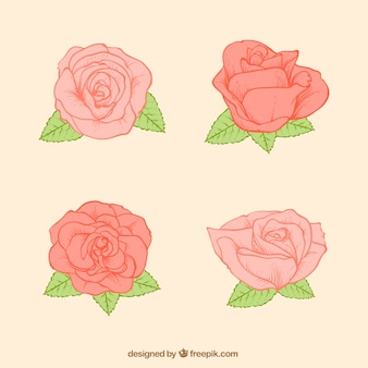 Packung mit vier rosen skizzen