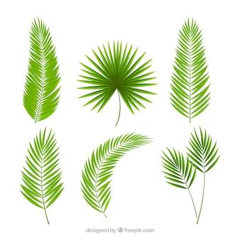 Packung palmblätter