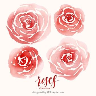 Packung rote aquarell rosen