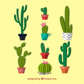 Packung schöne töpfe mit kaktus