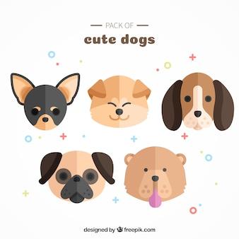 Packung von netten hunden