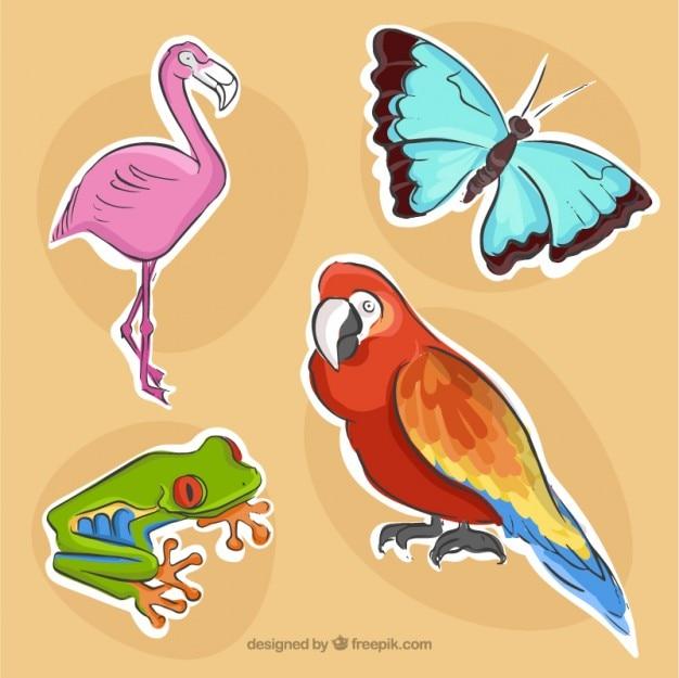 Packung von vögeln und anderen tieren