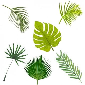 Palm-baum-blätter-sammlung