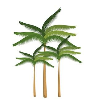 Palm beach design isoliert