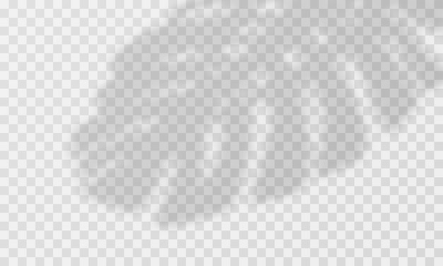 Palm shadow overlay. transparente palmblattauflage