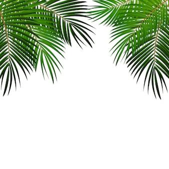 Palmblatt auf weißem hintergrund mit platz für ihre textvektorillustration eps10