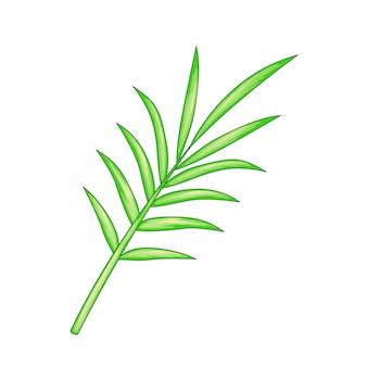 Palmblatt auf weißem hintergrund.