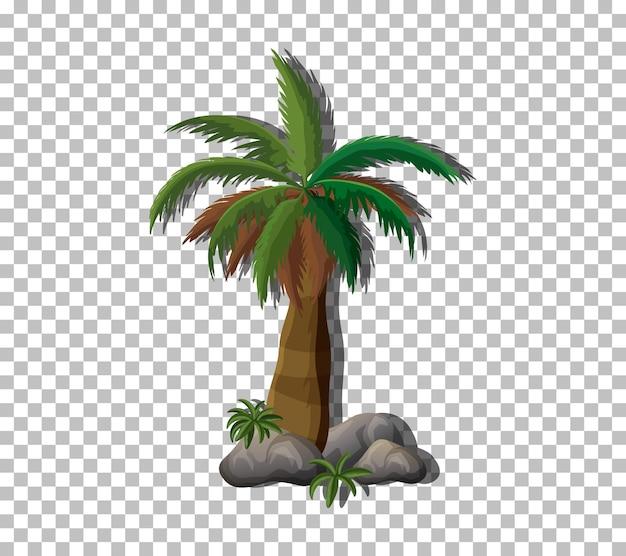 Palme auf transparentem hintergrund