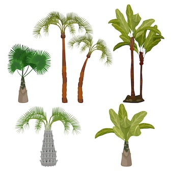 Palmen. strand kalifornien pflanzen brasilien hawaii garten palmen blatt cartoon-sammlung. grüne pflanze tropisch, hawaii tropische flora illustration