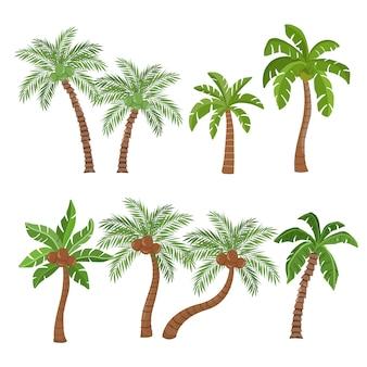 Palmen- und kokosnussbäume lokalisiert auf weißem hintergrund