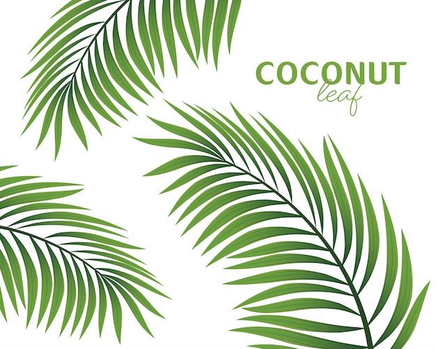 Palmenzweig lokalisiert auf einer weißen hintergrundillustration.