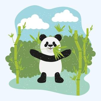 Pandabär und bambus