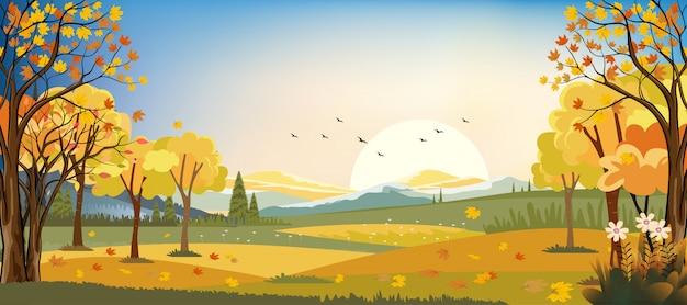 Panoramalandschaften des herbstbauernhoffeldes mit den ahornblättern, die von den bäumen, herbstsaison am abend fallen.