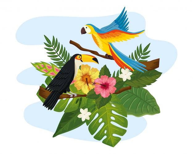 Papagei mit tukan und blattnatur