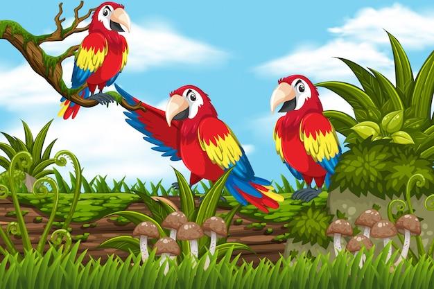 Papageien in der dschungelszene