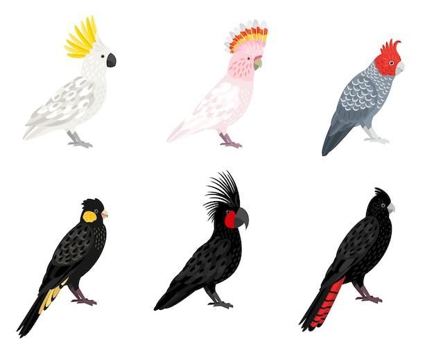 Papageien kakadu. tropische geflügelte vögel der karikatur, sittiche mit schnäbeln und farbigen federn, vektorillustration von wellensittichen des dschungels einzeln auf weißem hintergrund