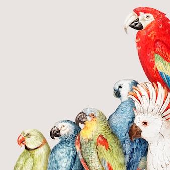 Papageien-rahmen