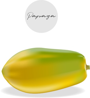 Papaya-frucht-vektor-illustration.
