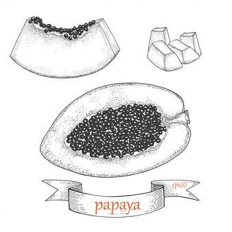 Papaya scheibe und hälfte. tropische frucht lokalisiert auf einem weißen hintergrund. grafikset.