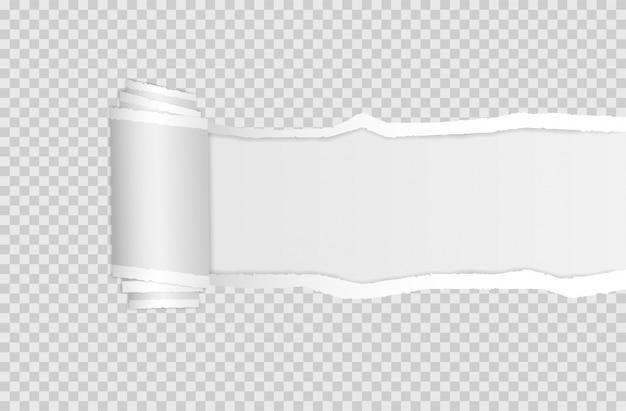 Papierrand zerrissen. zerrissene quadratische horizontale weiße papierstreifen.