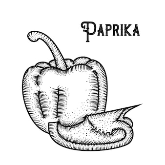 Paprika hand gezeichnet