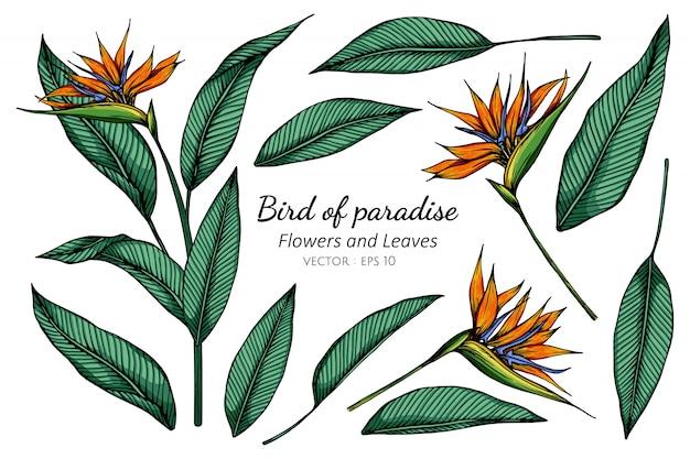 Paradiesblumen- und blattzeichnungsillustration mit strichzeichnungen auf weiß.