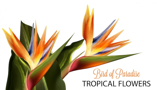 Paradiesvogel blumenaquarell