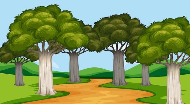 Parkszene mit bäumen und spur