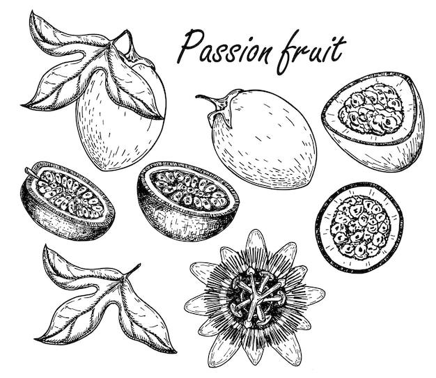 Passionsfrucht-vektor-zeichensatz handgezeichnete tropische lebensmittelillustration gravierte sommerobjekte