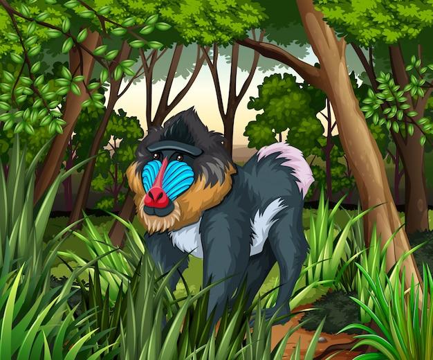 Pavian, der im dunklen wald lebt