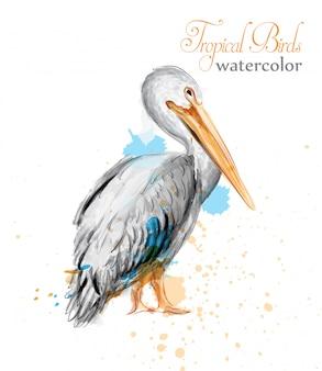 Pelikan aquarell