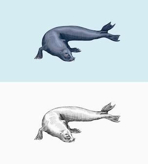 Pelzrobbe meerestiere seetier oder flossenfüßer vintage retro-schilder doodle-stil handgezeichnet