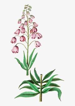 Persische lilie im vintage-stil