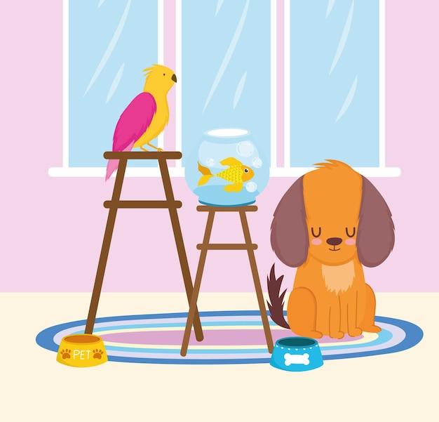 Pet shop papagei und fisch im stuhl mit hund und futter vektor-illustration