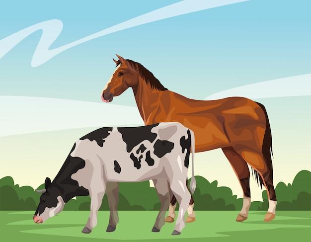 Pferd und kuh