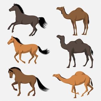 Pferde und kamele