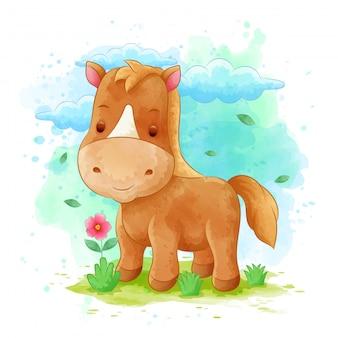 Pferdekarikaturen mit blumenrahmen mit aquarellhintergründen